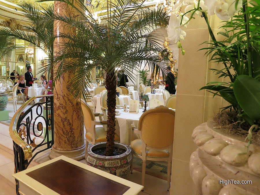 Palm Tree at The Palm Court of The Ritz London Hotel